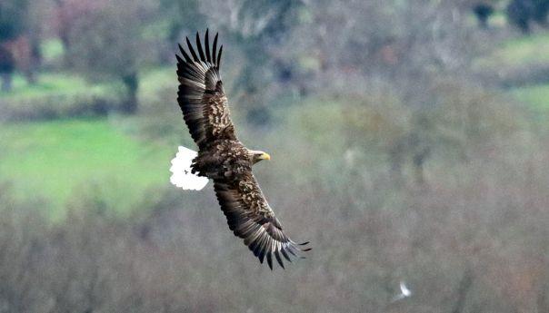Noël avant l'heure à l'étang des Landes pour les ornithologues du Limousin et d'Auvergne.